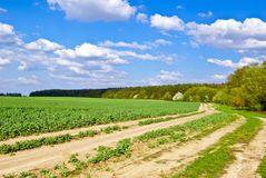Green field,road,forest,on the background of the blue sky with clouds Stock Photography