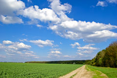 Green field,road,forest,on the background of the blue sky with clouds Stock Images