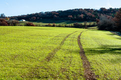 Green field road in Provence, France. Shot in a quiet morning Royalty Free Stock Photos