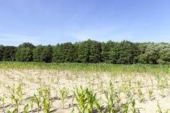 Green field Royalty Free Stock Photos
