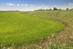 Green Field Rural Landscape Royalty Free Stock Photos