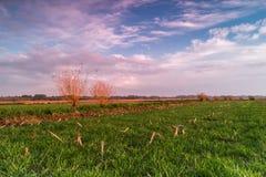Rural landscape at sunset. Green field, rural landscape at sunset Stock Photo