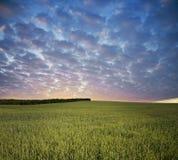 Green field in rural terrain Royalty Free Stock Image
