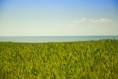 Green field and sea Royalty Free Stock Images