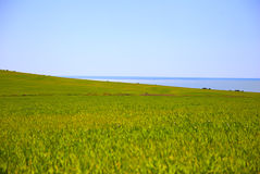 Green field and sea Royalty Free Stock Photography