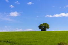 A green field and a single tree. Under the cloudy sky royalty free stock image