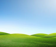 Green field and sky Stock Image