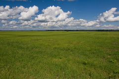 Green field and sky Royalty Free Stock Photo
