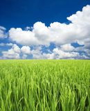 Green Field, Sky And Clouds Royalty Free Stock Images