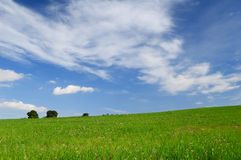 Green field and sky - Background Stock Photos