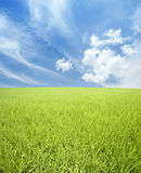 Green field, sky and clouds Stock Image