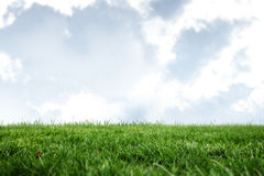 A green Field and sky. Field and sky with copy space Royalty Free Stock Photos