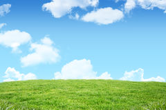 A green Field and sky. Field and sky with copy space Royalty Free Stock Photography
