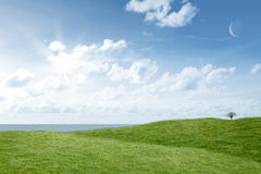 A green Field and sky. Field and sky with copy space Royalty Free Stock Image