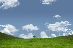 A green Field and sky. Field and sky with copy space Stock Photography