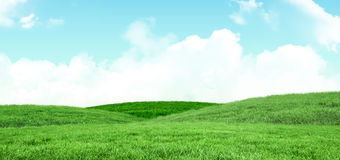 A green Field and sky. Field and sky with copy space Royalty Free Stock Photo