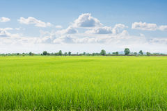Green field and sky with white clouds. Stock Photos