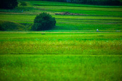Green field in Slovenian Alps Stock Images