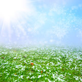 Green field with the snow Royalty Free Stock Image