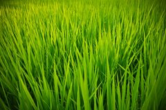 Green field. In somewhere at Japan Stock Photography
