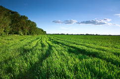 Green field in spring Royalty Free Stock Photos