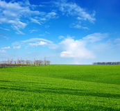 Green field in spring day Stock Images