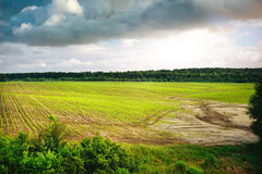 Green field of spring grass and forest. Tree in front Royalty Free Stock Photo