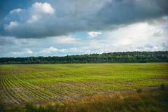 Green field of spring grass and forest. Tree in front Royalty Free Stock Image