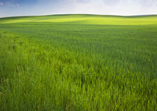 Green field in spring Stock Images
