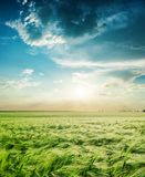 green field in spring and sunset in low clouds Royalty Free Stock Photography