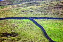Green field with stone wall. A stone wall going through a hillside field Royalty Free Stock Photos