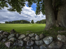 Green field with a stone wall and three-stemmed tree royalty free stock image