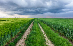 Green field and storm Stock Photos