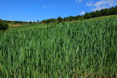 Green field. In Styria Country Austria Stock Photography
