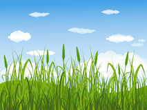Green field in summer. Summer field landscape with grass and sky Royalty Free Stock Photos
