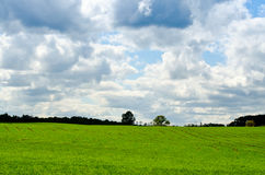 Green field in the summer Royalty Free Stock Photo