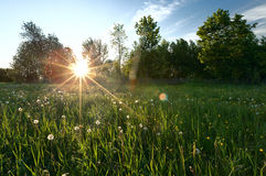 Green field on summer Royalty Free Stock Photos