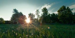 Green field on summer Stock Photos