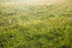 Green field by summer Royalty Free Stock Images