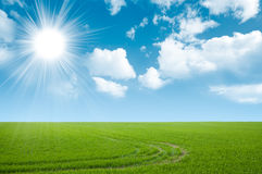 Green field and summer sky Royalty Free Stock Image