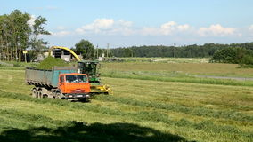 Green field in the summer of truck driving next to the combine. Pushkin, Russia - 2 July : on a green field in the summer of truck driving next to the combine stock video