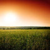 Green field and sun Royalty Free Stock Image