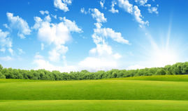 Green field in sun beams Royalty Free Stock Images