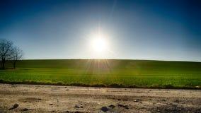 Green field  sun blue sky. Green field in the sun blue sky Royalty Free Stock Photo
