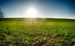 Green field  sun blue sky. Green field in the sun blue sky Royalty Free Stock Images