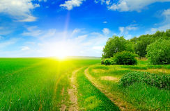 Green field and sun on blue sky. A green field and sun on blue sky Stock Image