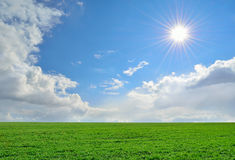 Green field, sun and cloudy sky. Field of lush green grass under a cloudy sky Stock Photo
