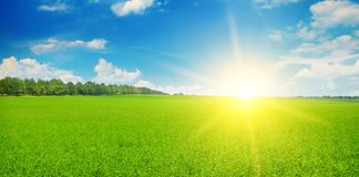 Green field and sun rise in the blue sky. Wide photo. stock photos