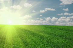 Green field and sun sky Royalty Free Stock Photography