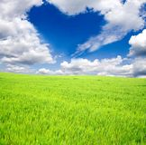 Green field and sun sky Stock Photography